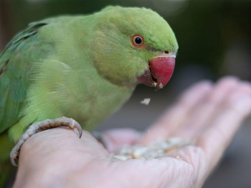 adotta un pappagallo