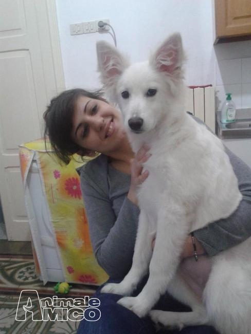 Offro in regalo cucciolo da volontario a mi sally 12 mesi - Cerco divano in regalo ...