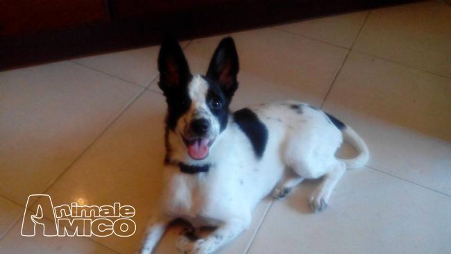 Regalo cucciolo da privato a fg caniin regalo macchia for Cerco una casa in regalo