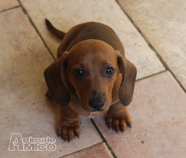 Cerco cucciolo in regalo padova regalo per un mese di for Cerco in regalo tutto per bambini