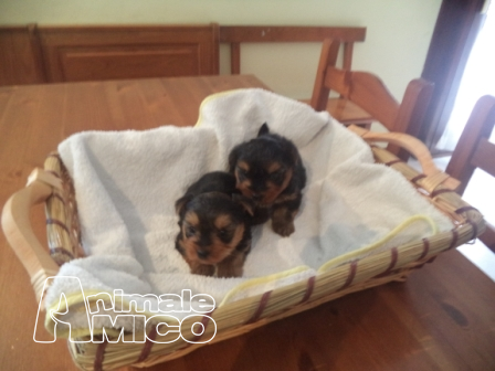 Cani in regalo piccola taglia padova offerte di lavoro for Subito offerte lavoro roma