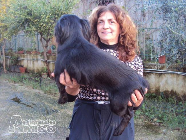 Regalo da privato a caniin regalo alina ha bisogno di for Cerco una casa in regalo