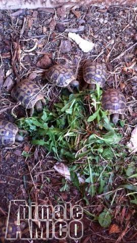 Vendita da privato a rm rettiliin vendita tartarughe di for Cerco acquario per tartarughe