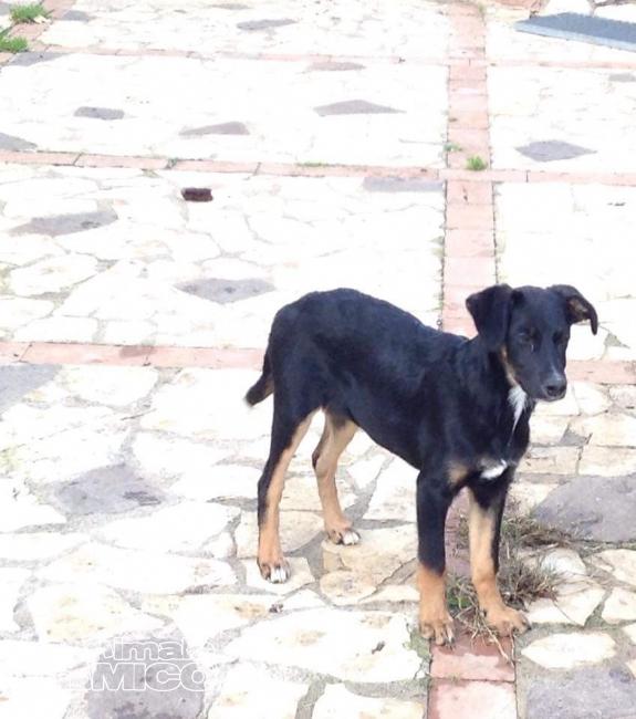 Offro in regalo cucciolo da privato a pr black 12 01 2016 for Offro in regalo mobili