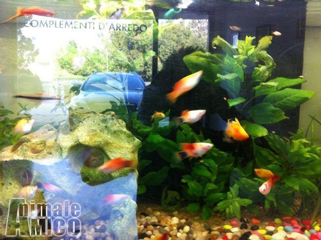 Vendita da privato a pg pesciin vendita pesci tropicali for Vendita on line pesci tropicali