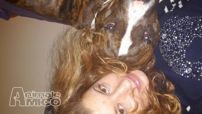 Cerco da privato a li caniin cerco dog sitter del 07 06 for Cerco dog sitter