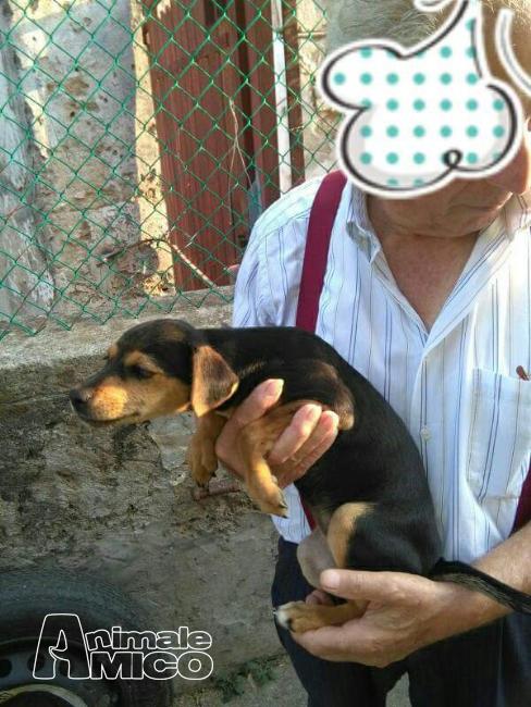Offro in regalo bassotto da privato a milano cuccioli for Cerco divano in regalo milano