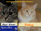gattini siberiani con pedigree