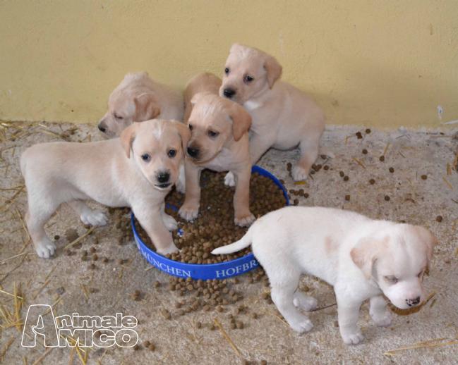 Cerco animali in regalo cerco cucciolo di cane taglia for Cerco di tutto in regalo