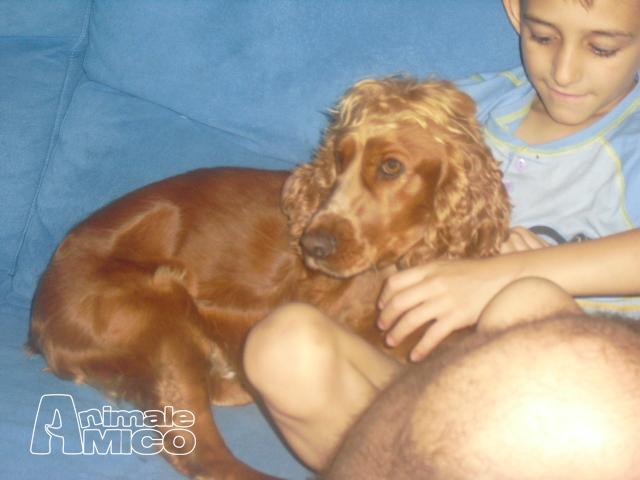Aereo Privato Cani : Vendita cani da privato a verona tutto per gli animali