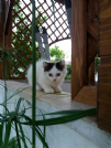 Regalo gattina bianca
