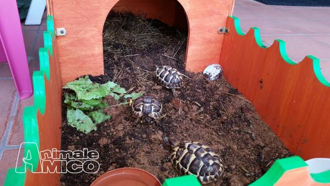 Vendita da privato a mi rettiliin vendita terrario per for Cerco acquario per tartarughe