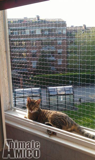 Vendita gatti da privato a milano rete di protezione gatti - Protezione per finestre ...