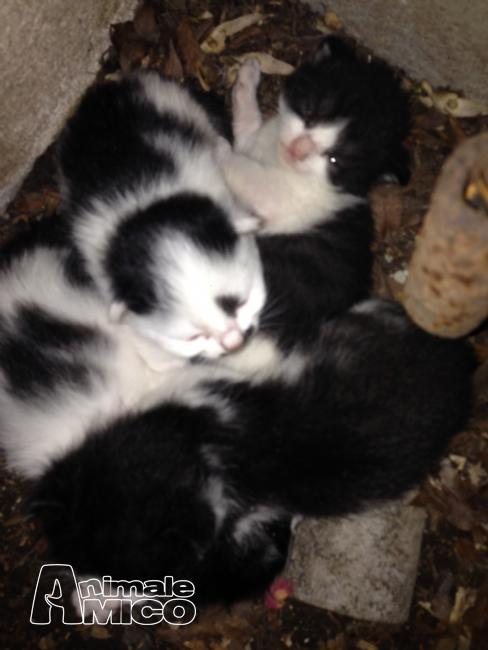 Offro in regalo cucciolo da privato a mi regalasi gattini for Cerco divano in regalo milano