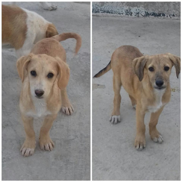 Offro in regalo cucciolo da associazione animali a mi for Cerco una casa in regalo