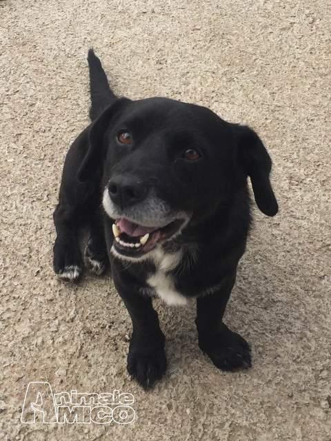 Offro in regalo da volontario a mi ciro cagnolino super for Cerco una casa in regalo