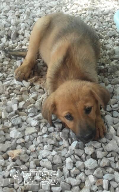 offro in regalo cucciolo da privato a le cercano casa 02