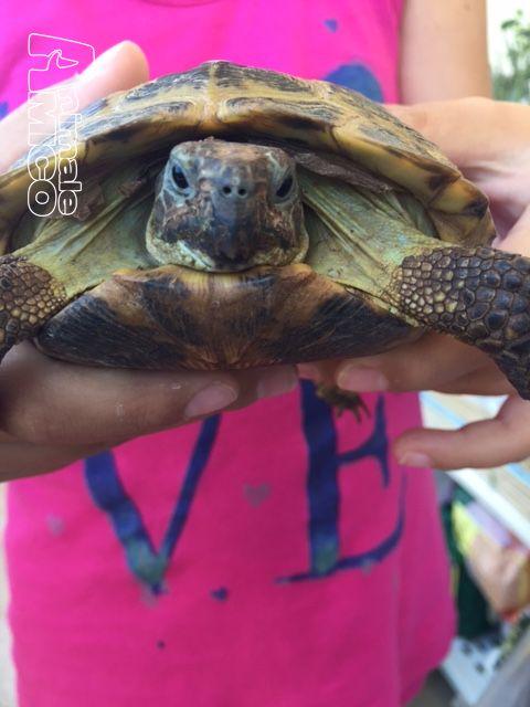 Vendita testudo hermanni da privato a bari tartarughe di for Cerco acquario per tartarughe