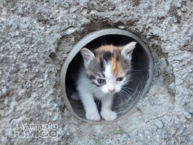 Regalo cucciolo europeo da privato a gatti europeo in for Cerco arredamento casa in regalo