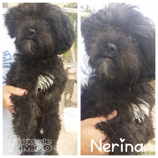 Offro In Regalo Cucciolo Da Associazione Animali A Mi Nerina