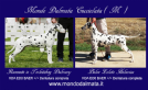 splendidi dalmata con pedigree