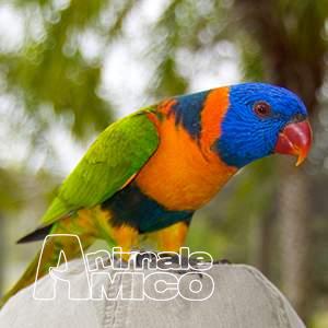 Cerco cenerino da privato a milano pappagallo cenerino 03 for Cerco divano in regalo milano
