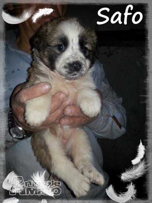 Offro in regalo cucciolo da volontario a me cuccioli for Cerco arredamento casa in regalo