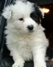 Cuccioli in regalo padova ebay