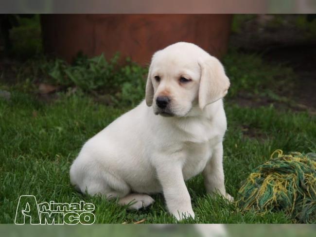Adozione cucciolo da privato a caniin adozione for Regalo offro gratis