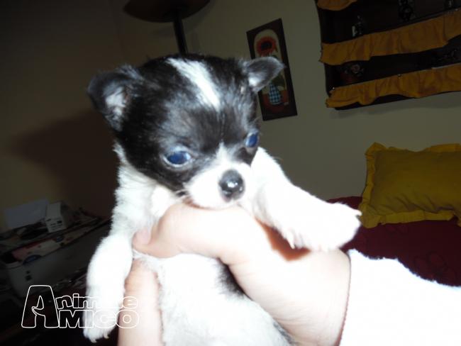 Cuccioli taglia piccola in regalo toscana premio pittura inail for Sito annunci regalo