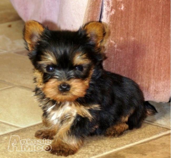 Annunci cuccioli cani milano for Sito annunci regalo