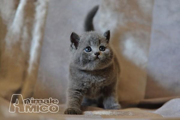 Cerco gattini in regalo veneto lush sconti for Cerco regalo mobili
