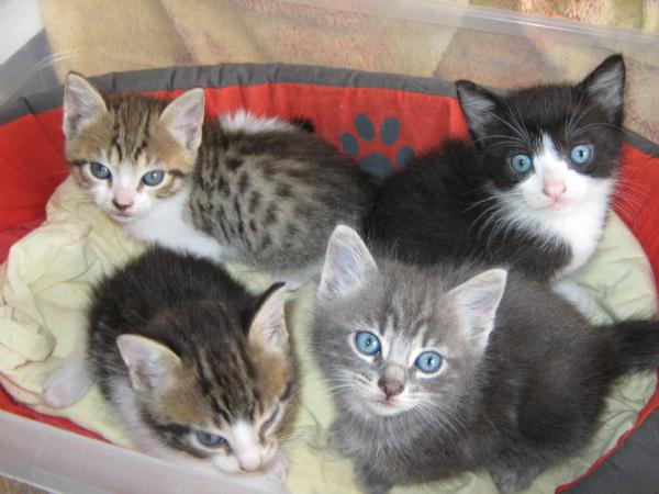 Gattini Cuccioli In Regalo