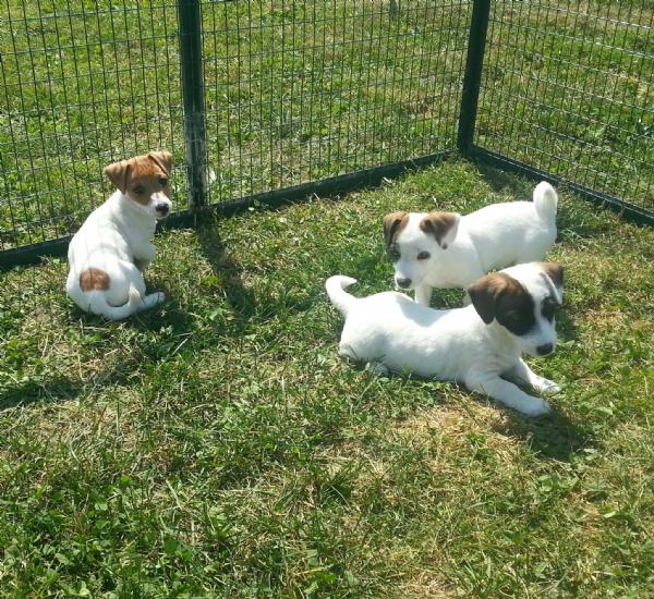 Cuccioli cane regalo umbria regalo cassapanca for Sito annunci regalo
