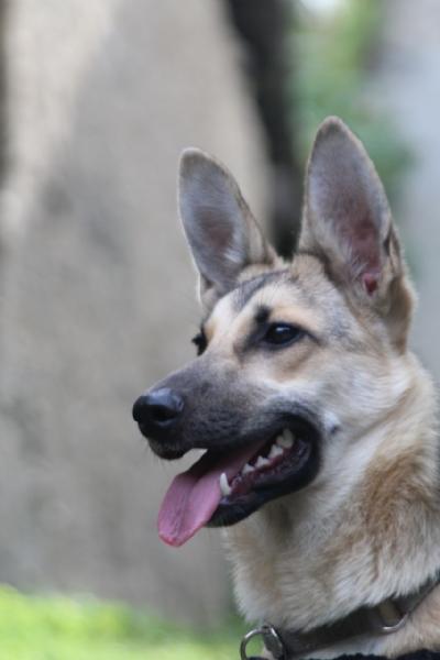 Regalo da privato a caniin regalo cerco casa per for Cerco in regalo tutto per bambini