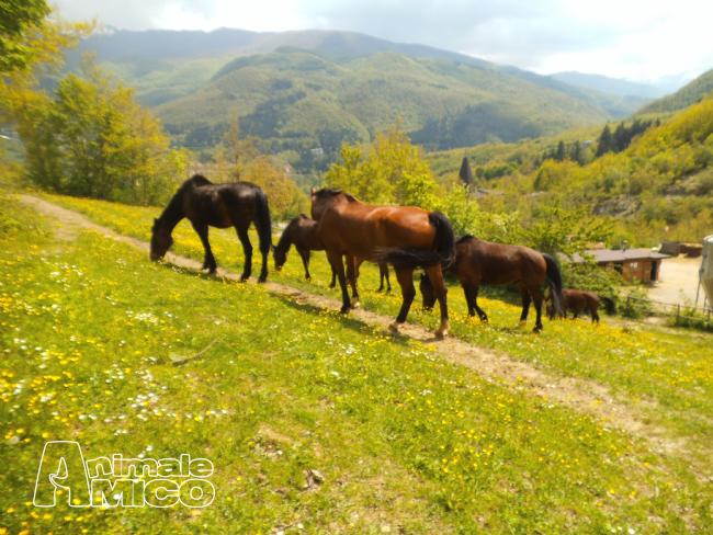 Vendita da privato a mo animali da cortilein vendita for Cavalli in vendita in trentino