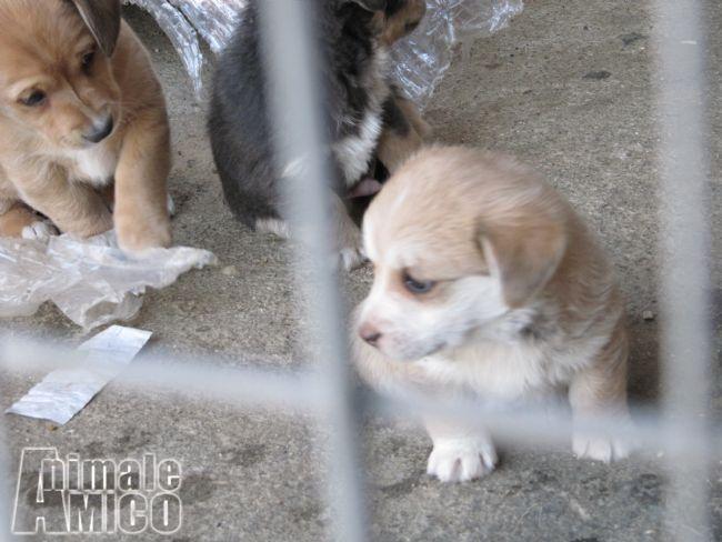 Offro in regalo cucciolo da privato a pn cuccioli meticci for Cani giocherelloni