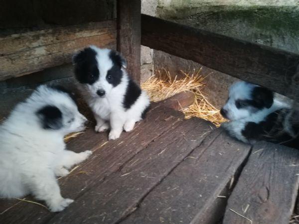 Offro in regalo cucciolo da privato a ri regalo 2 cuccioli for Offro in regalo mobili