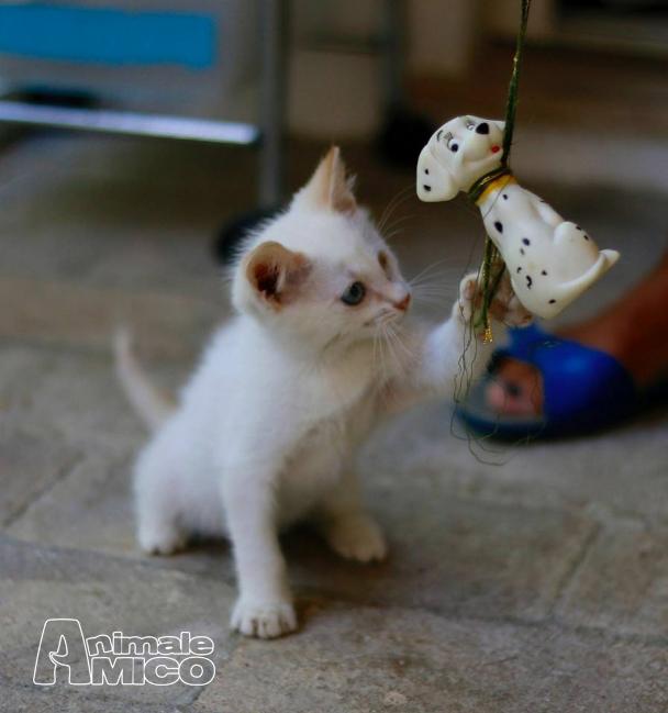 Adozione cucciolo europeo da associazione animali a for Offro in regalo mobili
