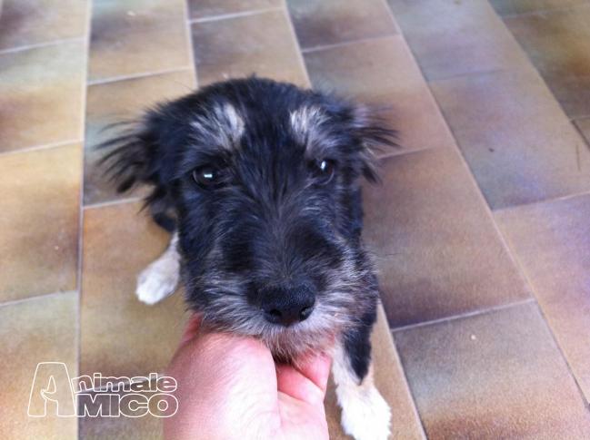 Offro in regalo cucciolo da associazione animali a bo for Sito annunci regalo