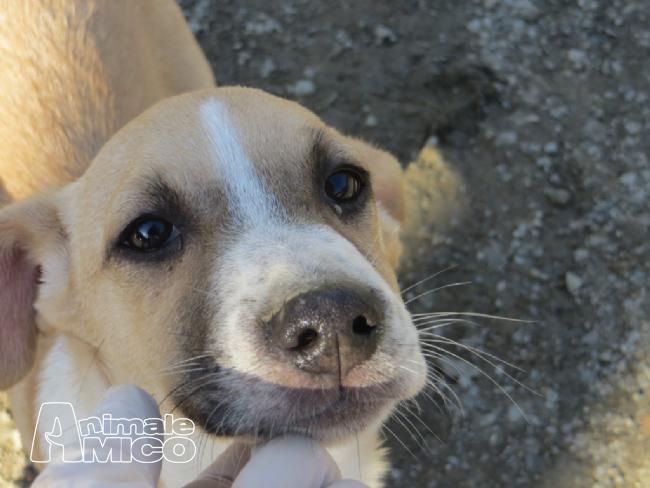 Offro in regalo cucciolo da associazione animali a to mia for Sito annunci regalo