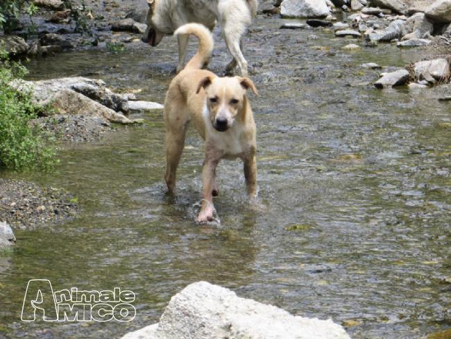 Regalo cucciolo da associazione animali a to caniin for Sito annunci regalo