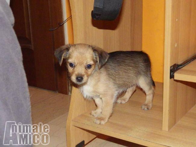 Offro in regalo cucciolo da associazione animali a si for Offro in regalo mobili