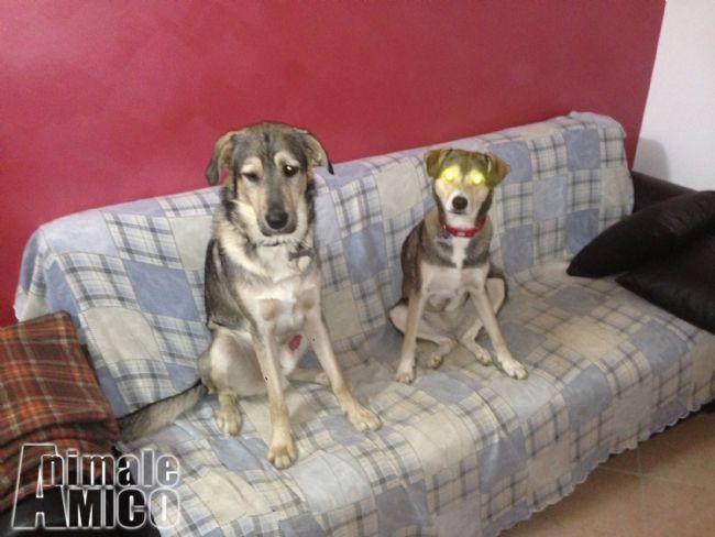 Offro in regalo cani da pensione animali a milano for Cerco divano in regalo milano