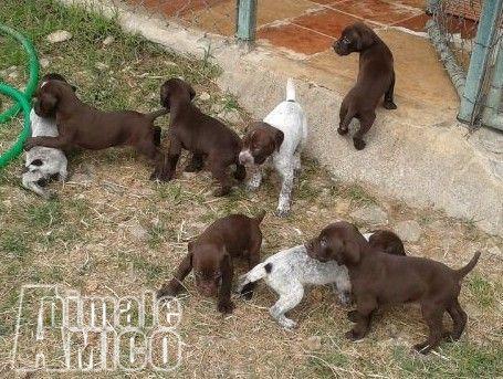 Regalo cuccioli umbria