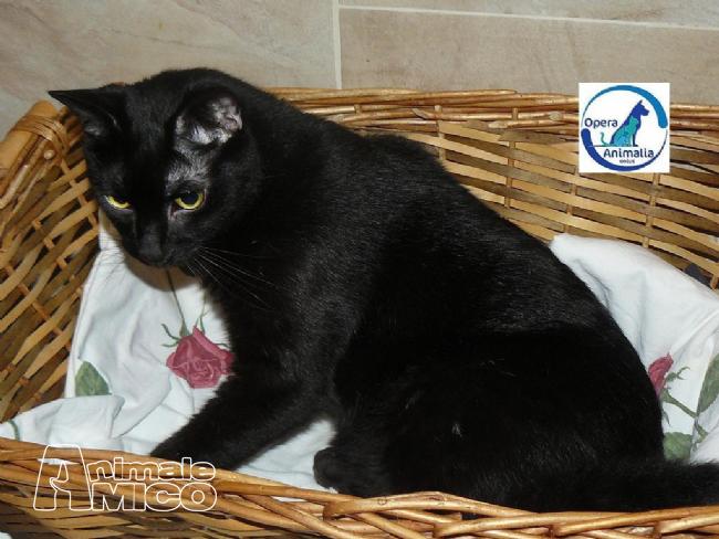 Offro in regalo europeo da associazione animali a milano for Cerco arredamento casa in regalo