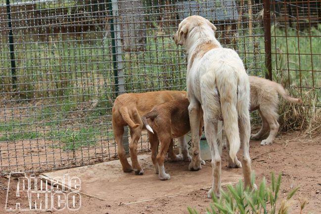 Regalo da volontario a vb caniin regalo dolcissima for Cerco una casa in regalo