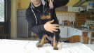 disponibili dobermann