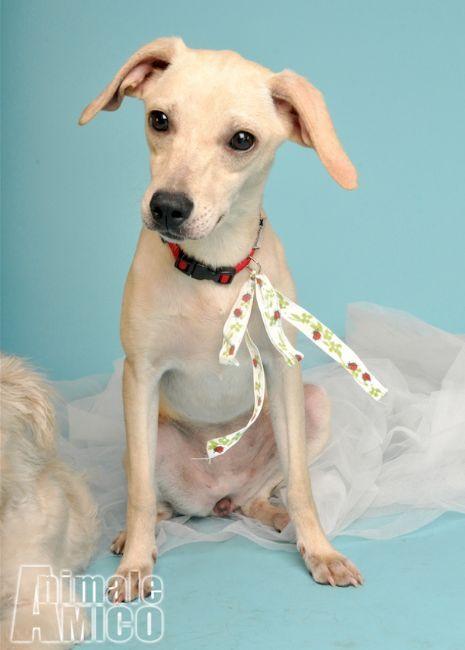 Offro in regalo cucciolo pinscher da associazione animali for Cerco divano in regalo milano