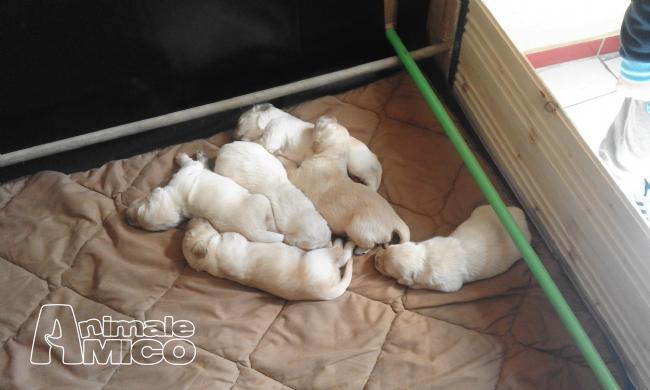 Vendita Cani Napoli Urgente Cerco Una Nuova Casa Per Mio Piccolo